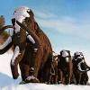 Živý mamut na Sibiři? Tady je důkaz (?)