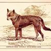 V Austrálii viděli podivného psího hybrida