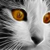 Blonďatý mimozemšťan s kočičíma očima prý zneužil ženu z Vancouveru