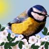 Tip na víkend: Vítání ptačího zpěvu