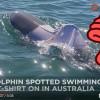 Delfín v tričku? Vyfotili ho v moři u australských břehů