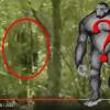 Bigfoota z Floridy nalákali na jablíčka a zkažené maso