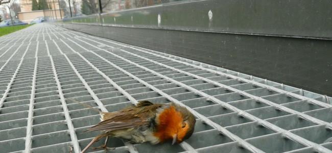 Motorová pila, kočka, sklo… Kdo je největší nepřítel ptáků?