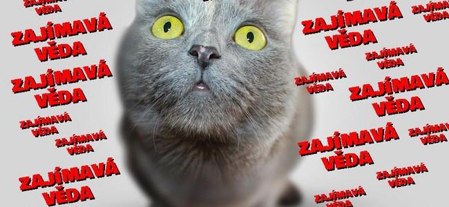 Supratekutá Schrödingerova kočka