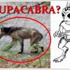 """Nové foto: CHUPACABRA, """"upír vysávající kozy"""", byl spatřen v USA"""