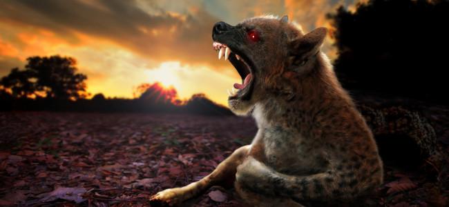 Po stopách tajemné chupacabry: krvelačný upír, návštěvník z vesmíru nebo prašivý pes?