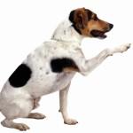 Detektiv Štika a Případ zázračného psa…