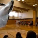 Plejtvák obrovský skočil do školní tělocvičny