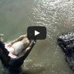 Video: Aligátoři, tygři a orli útočí na RC modely