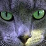 Obr se zelenýma očima pozoroval táborníky ve Virginii