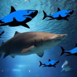 Skrytá kamera: Žralok útočí!