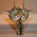 Optický klam: Jde kočka nahoru nebo jde dolů?