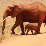 Zajímavosti o slonech