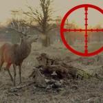 Dva Bigfooti vystrašili lovce jelenů v Severní Karolíně