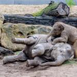 Malý Maxík řádí v pražském Údolí slonů