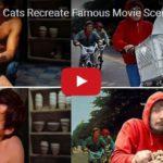 Britská kočka Tara se stala hlavní hrdinkou slavných filmových scén