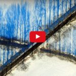 Optický klam: Stromy rostou nahoru i dolů