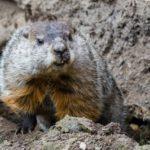 SVIŠTI UŽ SVIŠTÍ: chlupáči ze Zoo Praha už hlásí příchod jara