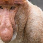 Pražská zoo zachraňuje PIVAŘE Z BORNEA